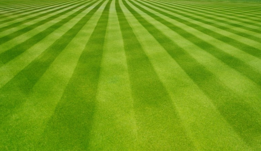 stripe cut lawn