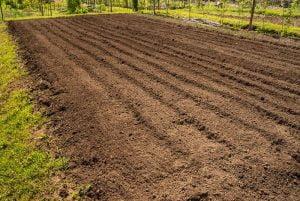 Tilled Land for sod planting